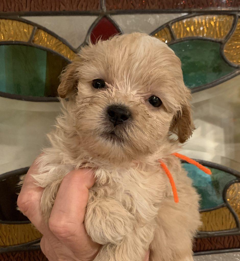 Home Little Darling Pups